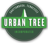 Tree Service Chattanooga
